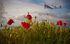 Picture the sky, clouds, flight, aviation, flowers, the plane, Mac, Maki, red, the plane, flies, al, …