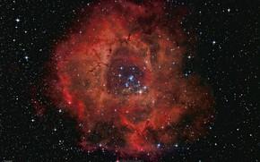 Wallpaper Rosette Nebula, emission, The Rosette Nebula, NGC 2237