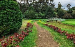 Picture greens, grass, trees, Park, the bridge, path, the bushes, Sri Lanka, Queen Victoria Park
