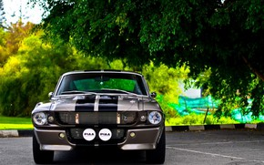 Wallpaper Ford Mustang, Shelby GT 350, car