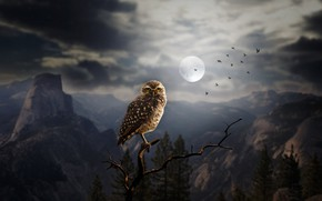 Wallpaper forest, rocks, night, birds, silhouettes, the moon, trees, owl, art, mountains, branch