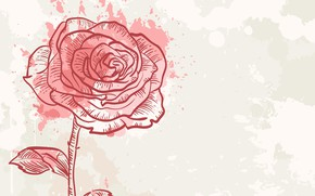 Picture Rose, Flower, Background, Texture