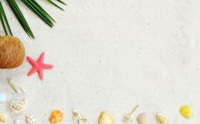 Picture sand, beach, background, star, shell, summer, beach, sand, marine, starfish, seashells