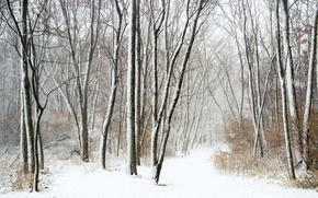 Picture winter, forest, snowfall