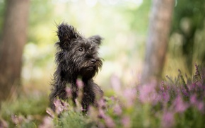 Picture grass, nature, dog, black