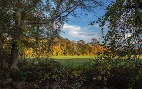 Picture autumn, forest, Thickets
