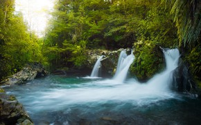 Picture forest, summer, trees, nature, waterfall