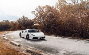 Picture road, white, sports car, Ferrari 488