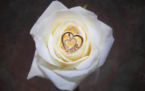 Picture flower, macro, rose, pendant, hearts, decoration