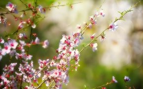Picture nature, branch, spring