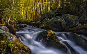 Wallpaper forest, moss, river, stones