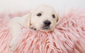 Picture baby, blanket, puppy