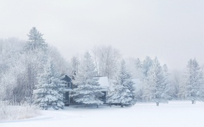 Picture winter, forest, snow, nature, frost, house