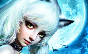 Picture look, night, face, eyelashes, collar, the full moon, ears, white hair, yellow eyes, Neko girl, …