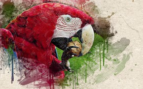 Picture The head of a parrot, drips of paint, beak, texture, walnut