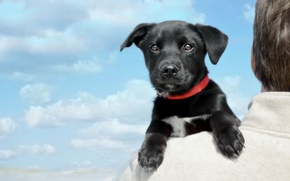 Picture look, clouds, dog, muzzle, puppy, on the shoulder, Labrador Retriever