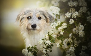 Picture dog, flowering, bokeh, Lilly