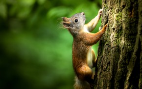 Picture light, nature, green, background, tree, protein, muzzle, trunk, bark, squirrel, rodents