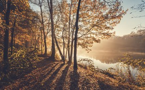 Picture autumn, nature, fog, river, morning