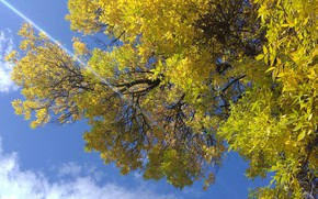 Picture autumn, the sky, tree