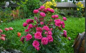 Wallpaper Flowers, Bush, Roses, Pink roses