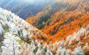 Picture frost, autumn, forest, snow, mountains, Japan
