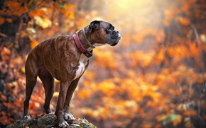 Picture each, autumn, dog