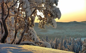 Picture winter, snow, trees, nature, ate, Hannu Koskela