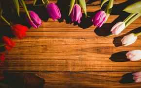 Picture flowers, tulips, buds, flowers, tulips, wooden background, buds, wooden background