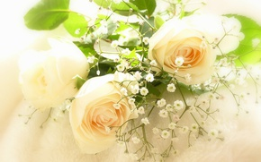 Picture tenderness, roses, gypsophila