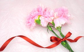 Picture Flowers, tape, bow, clove