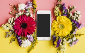 Picture flowers, spring, colorful, chrysanthemum, flowers, smartphone, spring, bright