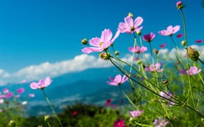 Picture the sky, petals, flowers