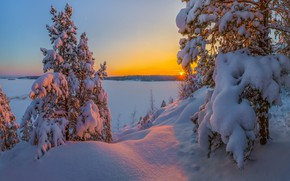 Picture winter, snow, sunset, lake, the snow, pine, Russia, Lake Ladoga, Leningrad oblast, The Gulf Of …