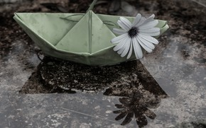 Picture mood, Daisy, paper boat