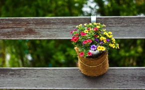 Picture flowers, nature, the fence, pot