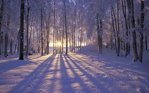 Picture forest, Winter, trees, landscape, nature, snow, morning, sun, snowy