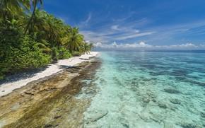 Picture sea, beach, summer, tropics, shore, Nature