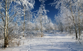 Picture Winter, Trees, Snow, Traces, Russia, Frost, Russia, Winter, Frost, Snow, Trees