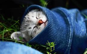 Wallpaper cat, sleeping, kitty, sleeve, cat