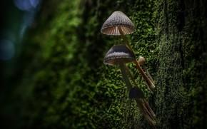 Picture forest, macro, tree, mushrooms, moss, bark