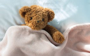 Picture toy, bear, bear, bear, teddy, bed, little, cute