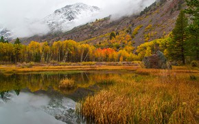 Picture autumn, forest, grass, trees, mountains, lake, the reeds, stones, CA, USA