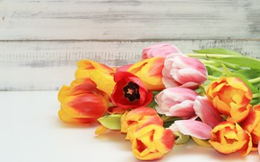 Picture flowers, colorful, tulips, fresh, wood, flowers, beautiful, tulips, spring