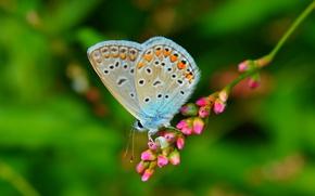Picture Macro, Butterfly, Macro, Butterfly