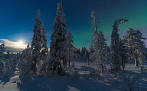 Wallpaper Finland, In Kuusamo, forest, winter