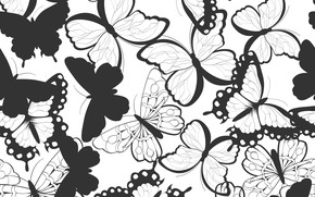 Picture black and white, Pattern, Butterfly, Texture