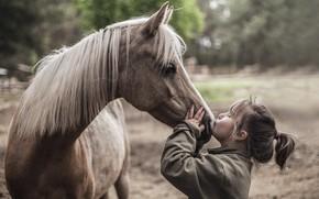 Wallpaper mood, horse, girl