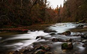 Picture nature, river, stream