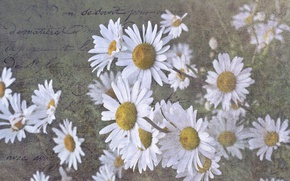 Picture letter, background, chamomile